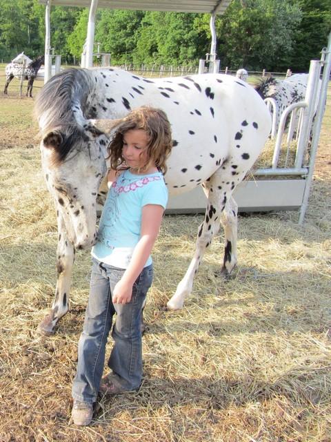 Les vacances chez Talisman Horses Absinth_2011-05_05