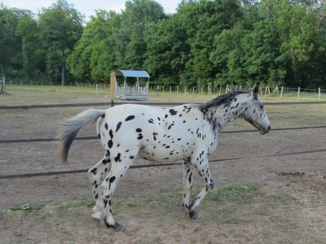 Les vacances chez Talisman Horses Absinth_2011-05_06