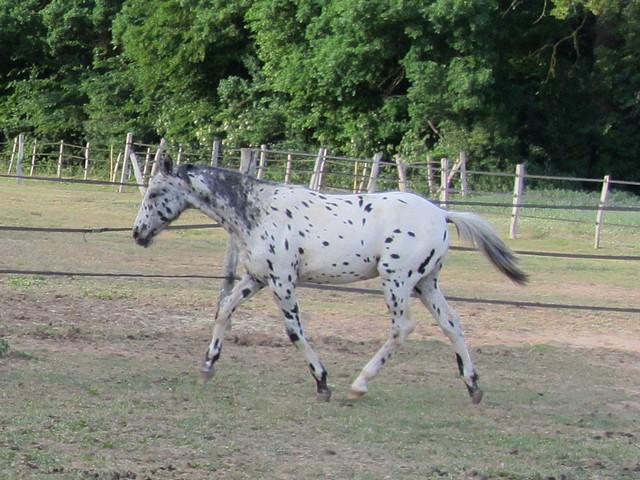 Les vacances chez Talisman Horses Absinth_2011-05_08