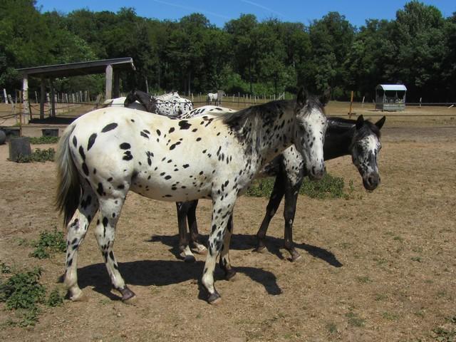Les vacances chez Talisman Horses - Page 3 Absinth_2011-05_10