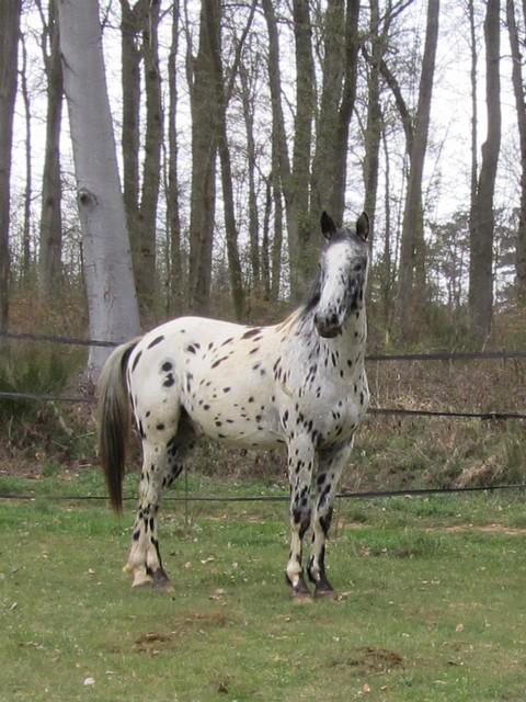 Les vacances chez Talisman Horses - Page 6 Absinth_2012-04_03
