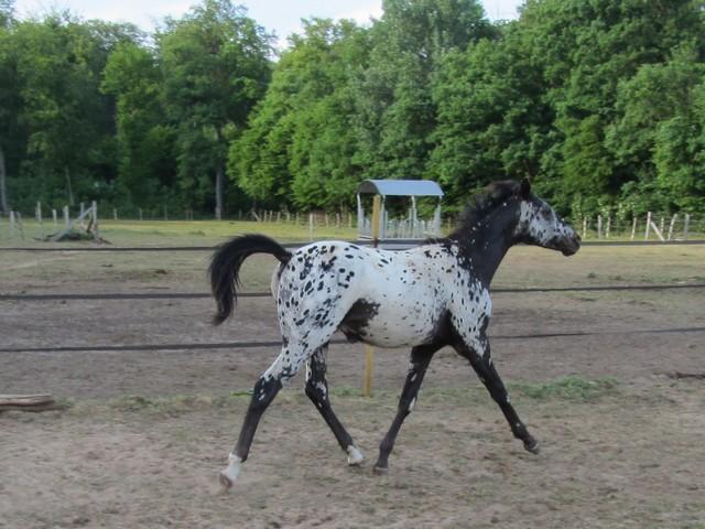 Les vacances chez Talisman Horses Absolut_2011-05_04