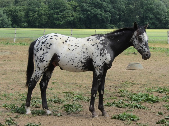 Les vacances chez Talisman Horses - Page 2 Absolut_2011-05_06