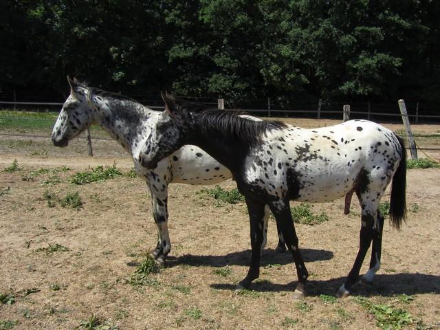 Les vacances chez Talisman Horses - Page 3 Absolut_2011-05_08