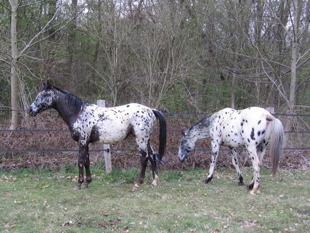 Les vacances chez Talisman Horses - Page 6 Absolut_2012-04_02