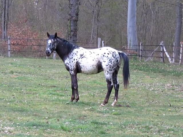 Les vacances chez Talisman Horses - Page 6 Absolut_2012-04_05