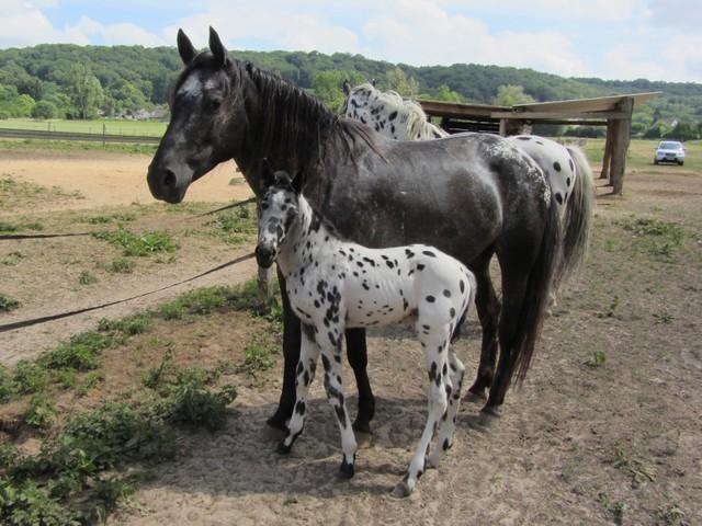Les vacances chez Talisman Horses - Page 2 Brisk_2011-05_04
