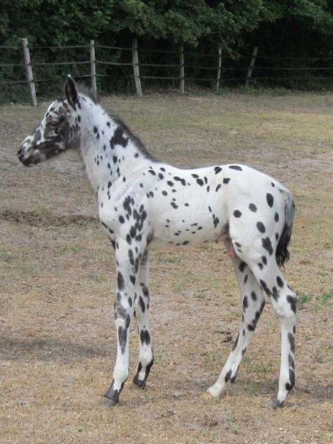 Les vacances chez Talisman Horses - Page 2 Brisk_2011-05_05