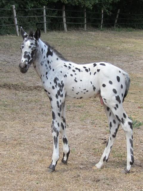 Les vacances chez Talisman Horses - Page 2 Brisk_2011-05_06