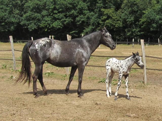 Les vacances chez Talisman Horses - Page 2 Brisk_2011-05_07