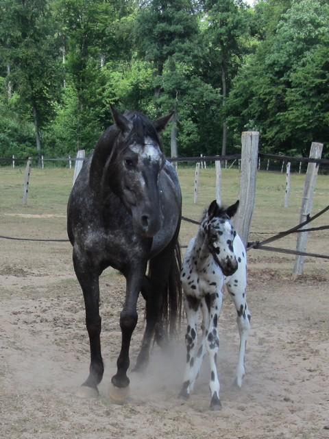 Les vacances chez Talisman Horses - Page 2 Brisk_2011-05_08