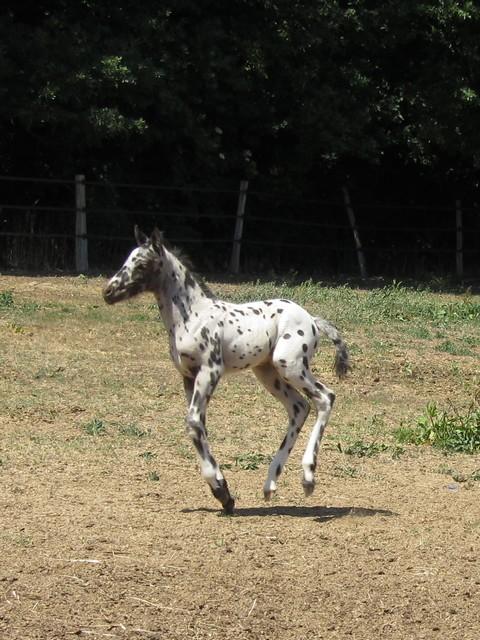 Les vacances chez Talisman Horses - Page 3 Brisk_2011-05_09