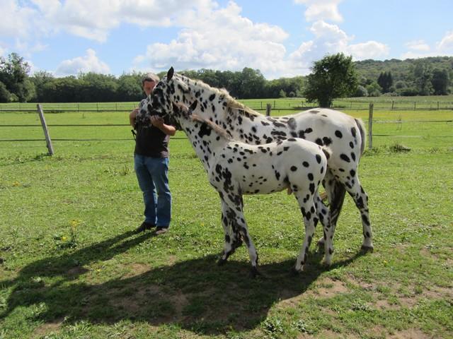 Les vacances chez Talisman Horses - Page 5 Brisk_2011-08_03