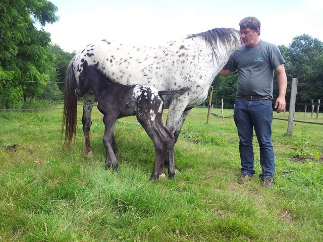 Les vacances chez Talisman Horses - Page 8 Cherokee_2012-07_02
