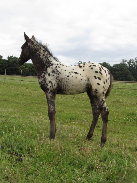 Les vacances chez Talisman Horses - Page 7 Chinook-2012-07_01