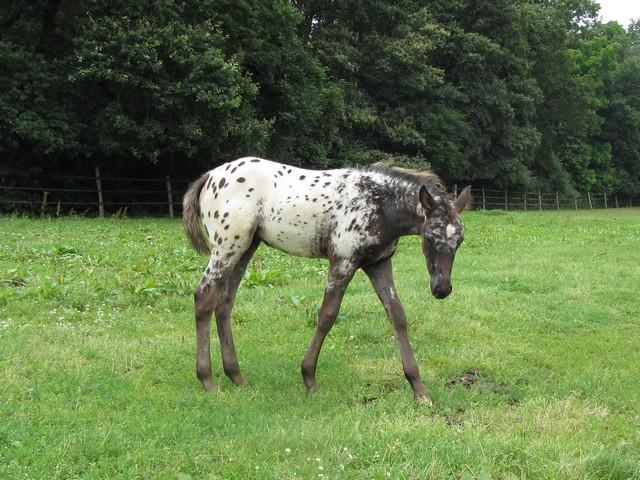 Les vacances chez Talisman Horses - Page 7 Chinook-2012-07_02