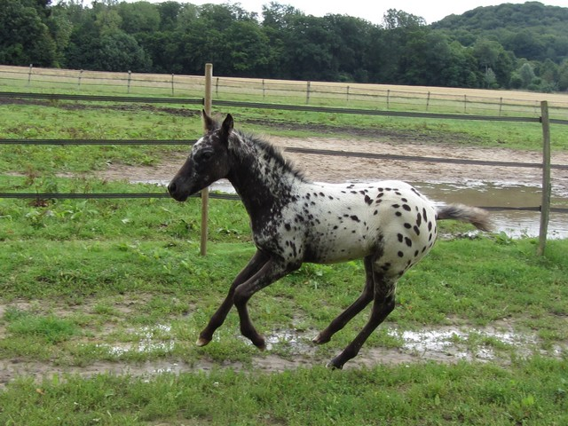 Les vacances chez Talisman Horses - Page 7 Chinook-2012-07_05
