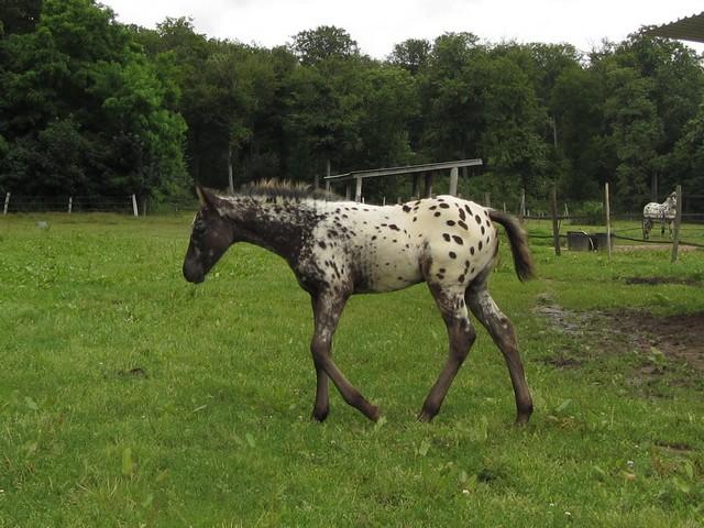 Les vacances chez Talisman Horses - Page 7 Chinook-2012-07_08