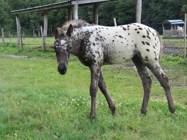 Les vacances chez Talisman Horses - Page 7 Chinook-2012-07_09