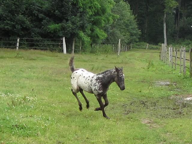 Les vacances chez Talisman Horses - Page 7 Chinook-2012-07_10