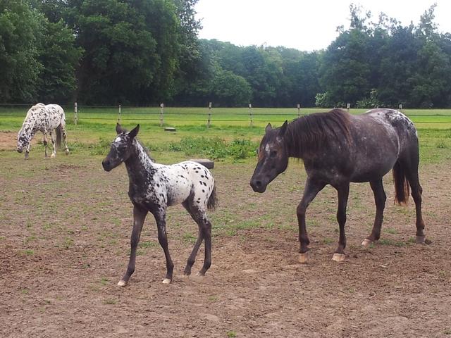 Les vacances chez Talisman Horses - Page 7 Chinook_2012-06_01