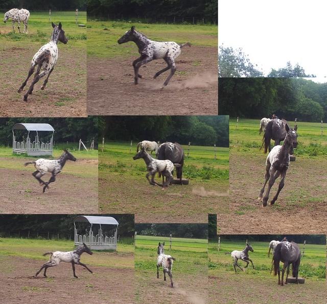 Les vacances chez Talisman Horses - Page 7 Chinook_2012-06_02
