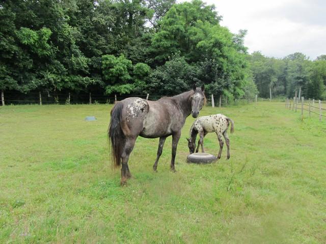 Les vacances chez Talisman Horses - Page 7 Cikala_2012-07_01
