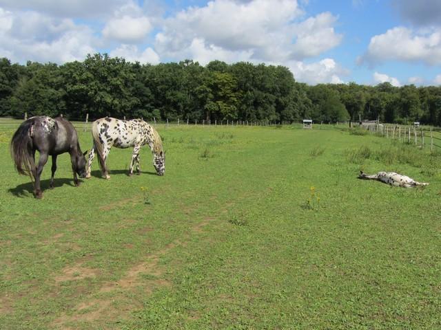 Les vacances chez Talisman Horses - Page 5 Chevaux_2011-08_01