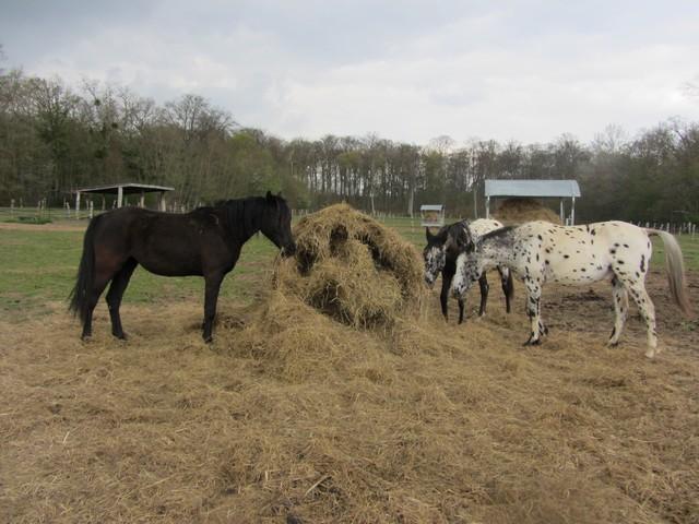 Les vacances chez Talisman Horses - Page 6 Chevaux_2012-04_01