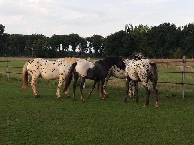 Talisman Horses, les news Chevaux_2015-08_02