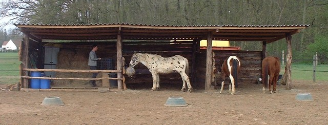 talisman horses elevage d 39 appaloosas fondations albums installations. Black Bedroom Furniture Sets. Home Design Ideas