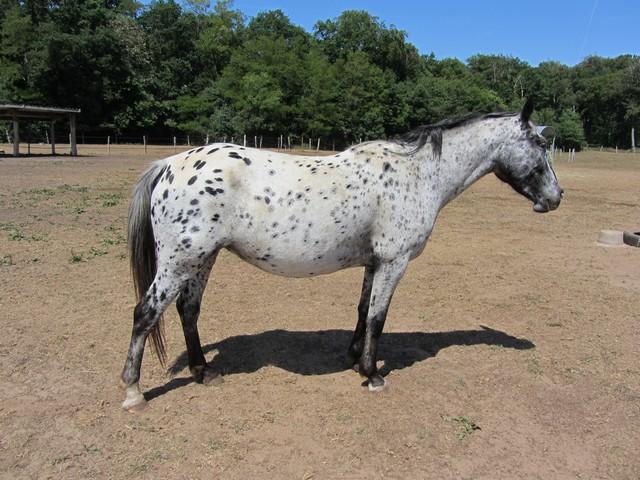 Les vacances chez Talisman Horses - Page 3 Ruby_2011-05_02