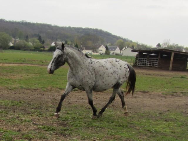 Les vacances chez Talisman Horses - Page 6 Ruby_2012-04_01