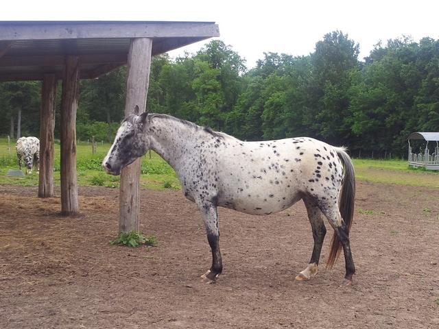 Les vacances chez Talisman Horses - Page 7 Ruby_2012-06_01