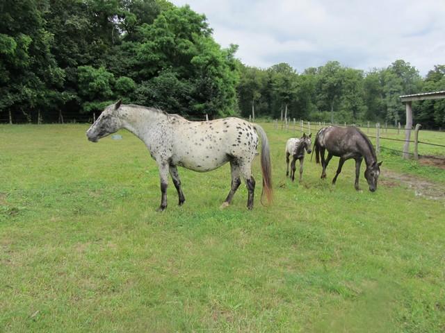 Les vacances chez Talisman Horses - Page 7 Ruby_2012-07_02