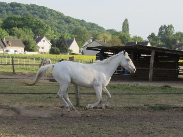 Les vacances chez Talisman Horses Shenoa_2011-05_06