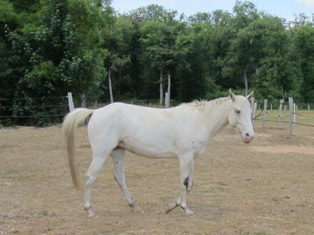 Les vacances chez Talisman Horses - Page 2 Shenoa_2011-05_08