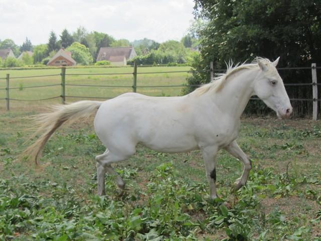 Les vacances chez Talisman Horses - Page 2 Shenoa_2011-05_09
