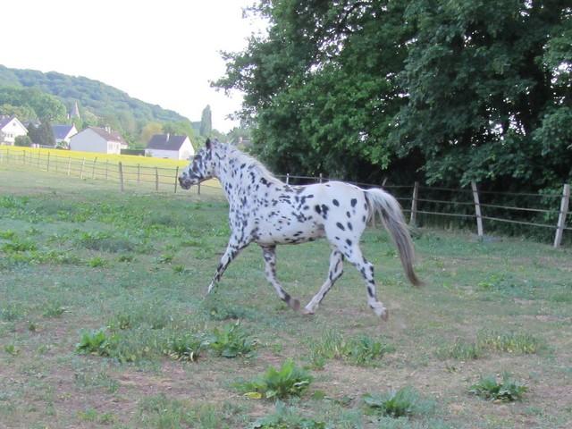 Les vacances chez Talisman Horses Sully_2011-05_05