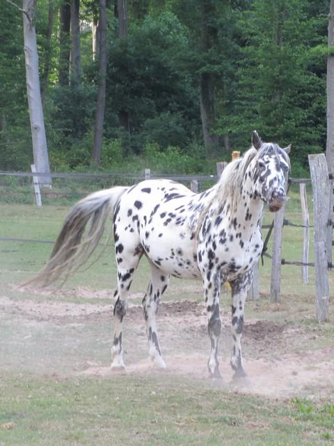 Les vacances chez Talisman Horses Sully_2011-05_06