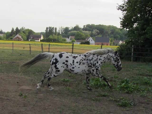 Les vacances chez Talisman Horses Sully_2011-05_07