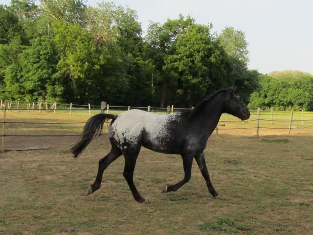 Les vacances chez Talisman Horses Ultimate_2011-05_05