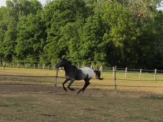 Les vacances chez Talisman Horses Ultimate_2011-05_06