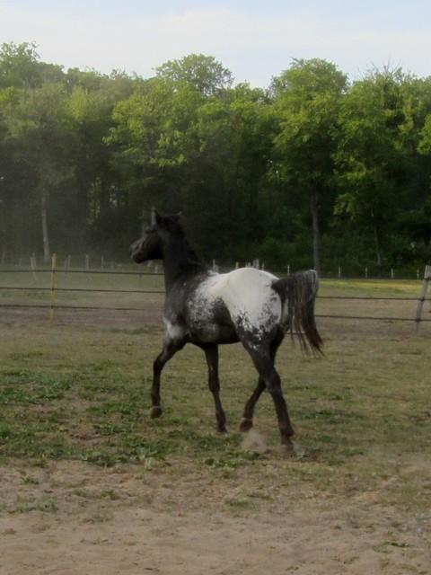 Les vacances chez Talisman Horses Ultimate_2011-05_08