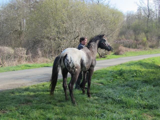 Les vacances chez Talisman Horses - Page 6 Ultimate_2012-04_01