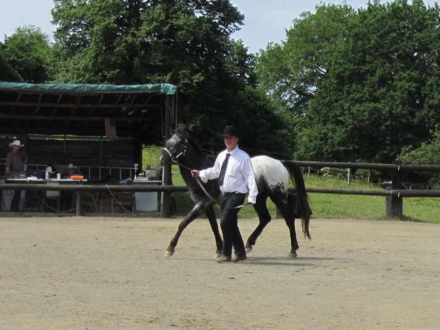 Les vacances chez Talisman Horses - Page 6 Ultimate_2012-06_05