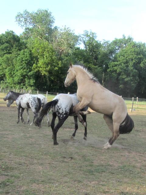 Les vacances chez Talisman Horses Unreal_2011-05_03