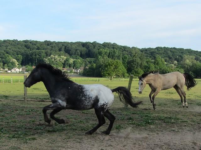 Les vacances chez Talisman Horses Unreal_2011-05_04