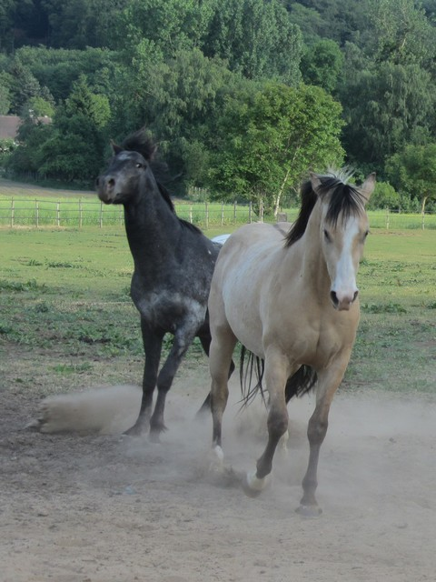 Les vacances chez Talisman Horses Unreal_2011-05_05