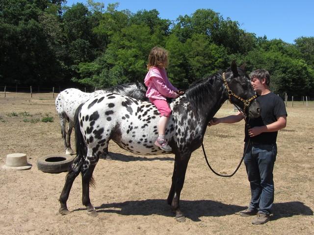 Les vacances chez Talisman Horses - Page 3 Venusian_2011-05_08